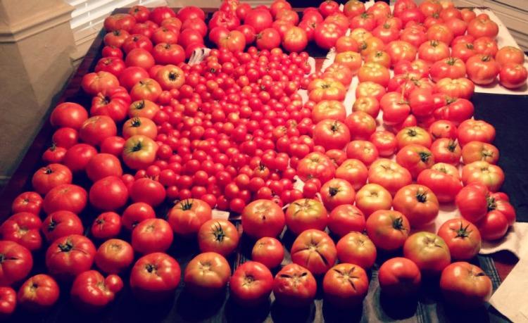 tomato overload