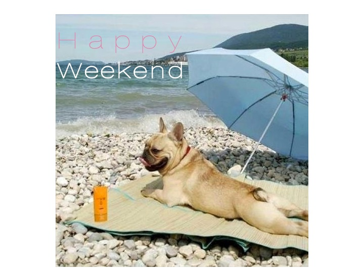 happy weekend- dog