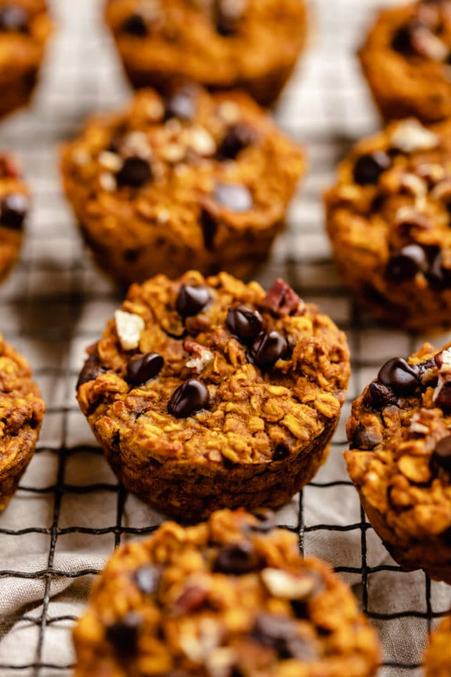 pumpkin oatmeal muffins topped with chocolate chips